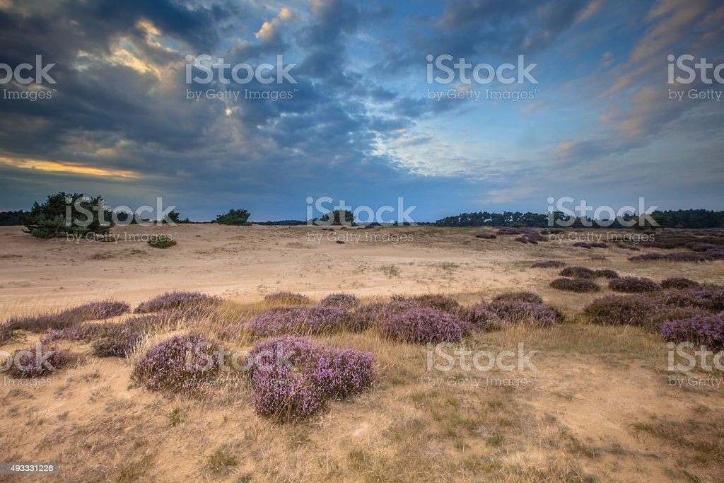 Hoge Veluwe Sandy Heathland stock photo
