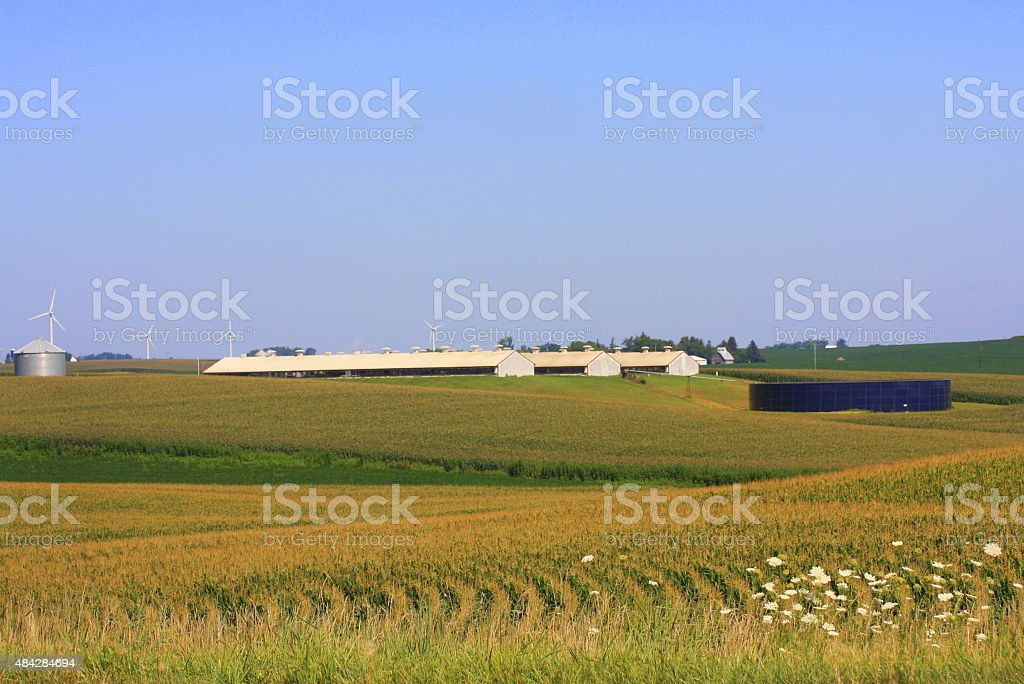 Hogs Barns and Wind Turbines in Iowa stock photo