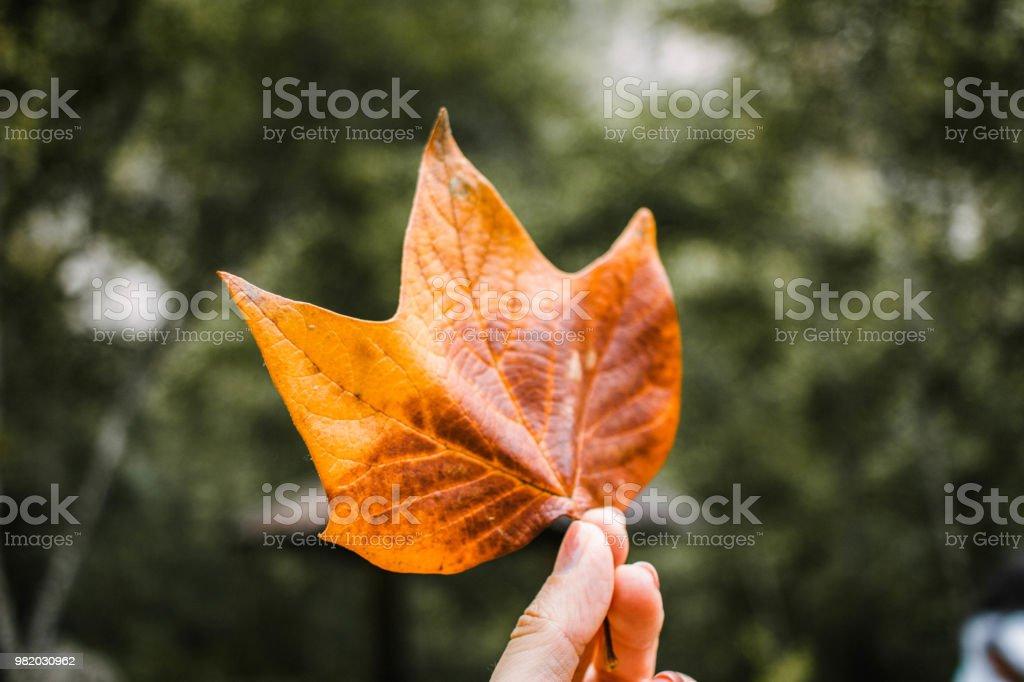Hoja de árbol - foto de stock