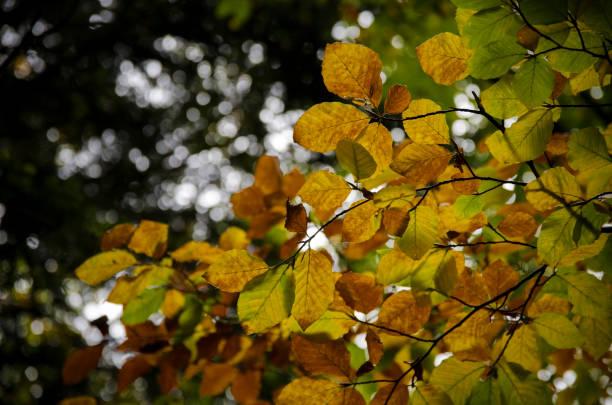 Hojas de otoño stock photo