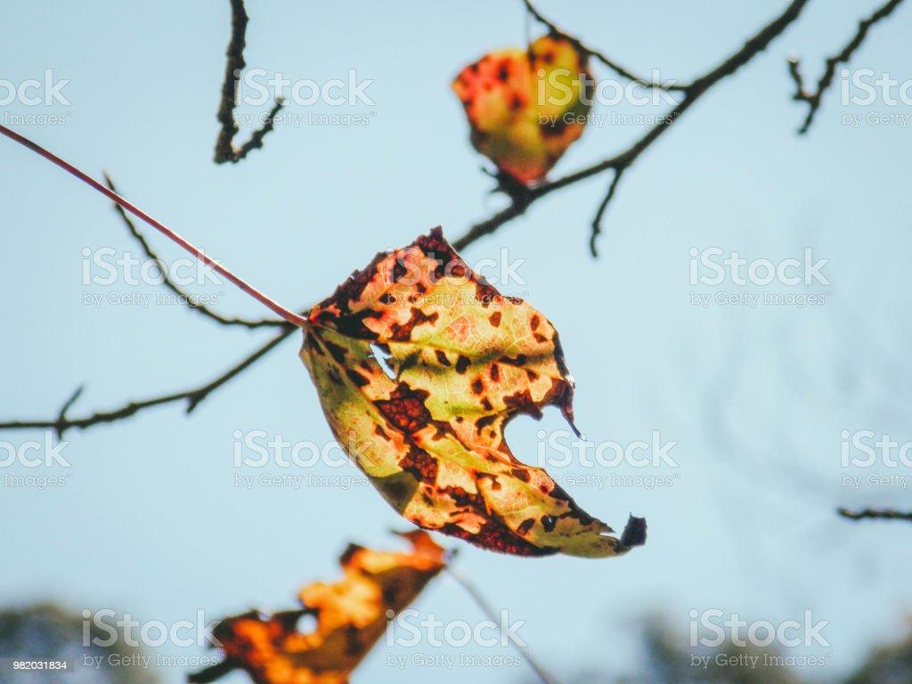 Hojas de árbol - foto de stock