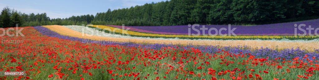 Hokkaido Sommer Blumenfelder Lizenzfreies stock-foto