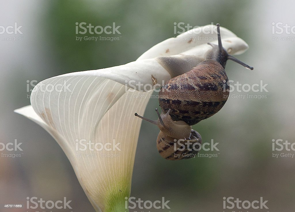 Hold me tight royalty-free stock photo