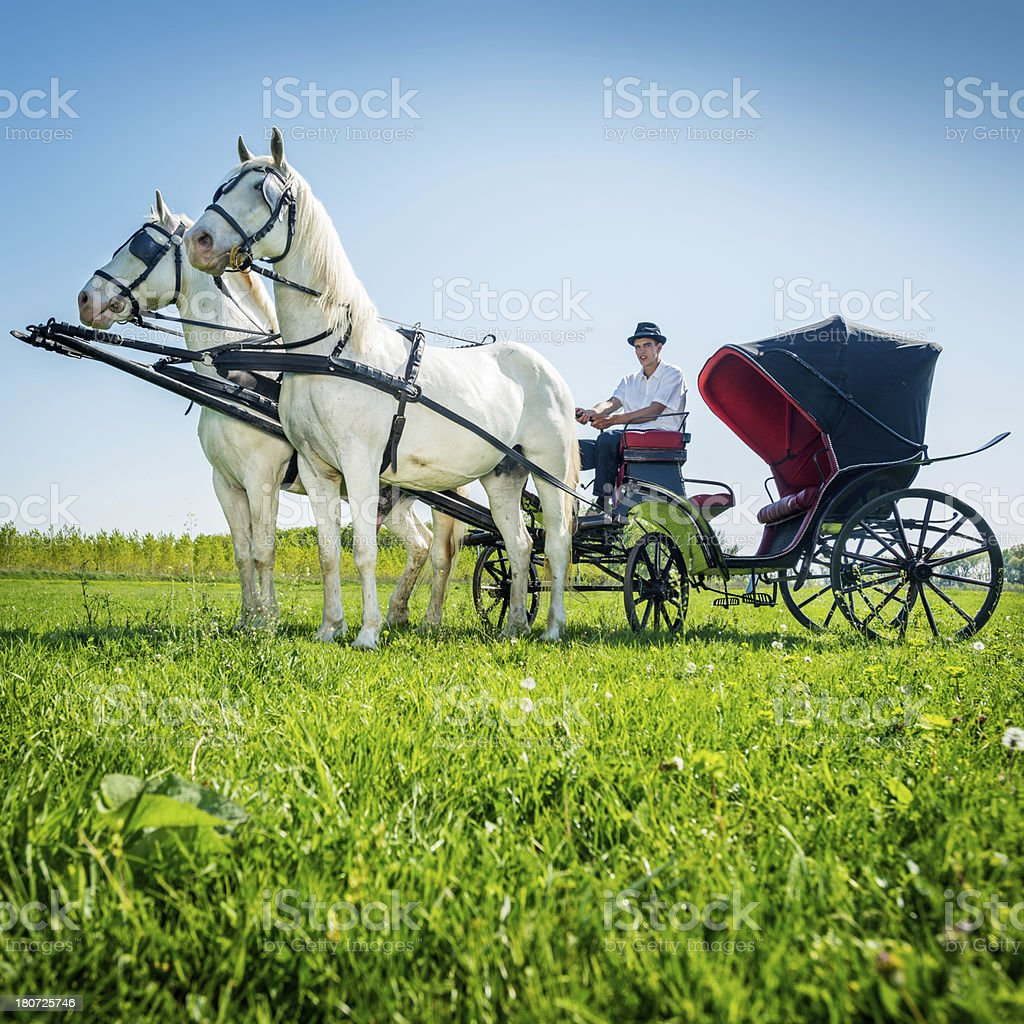 Hold your horses royalty-free stock photo