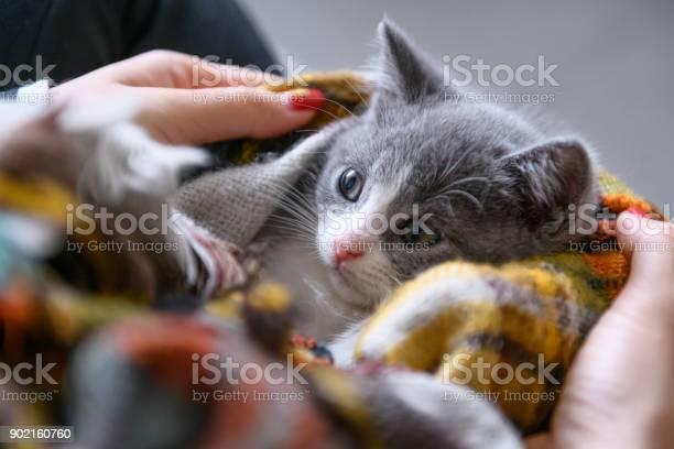 Holding a cute kitten picture id902160760?b=1&k=6&m=902160760&s=612x612&h=8ui93dznias ijyixc vhs2lnprkahyb74m uzofv3a=