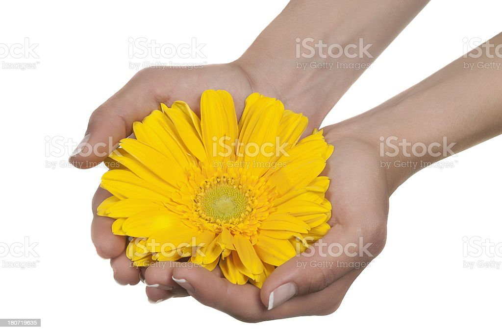 Holding a flower royalty-free stock photo