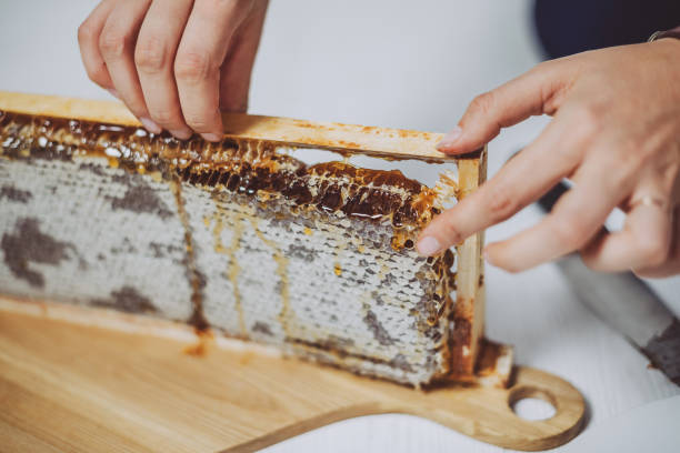 Holding a frame of honeycomb stock photo