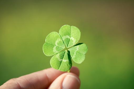 Holding a lucky four leaf clover, good luck shamrock, or lucky charm.
