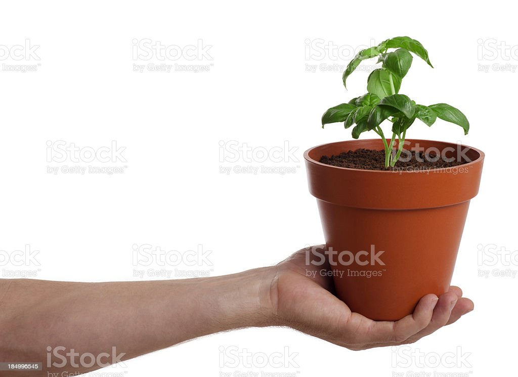 Holding a Potted Plant stock photo