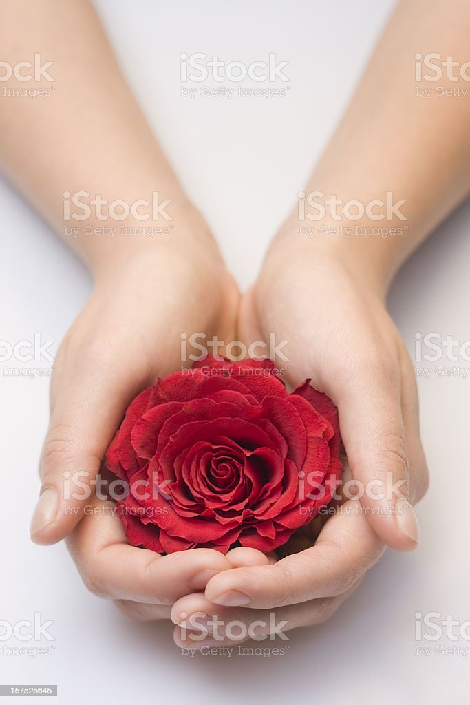 Holding a red rose stock photo