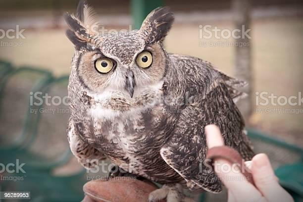 Holding an owl picture id95289953?b=1&k=6&m=95289953&s=612x612&h= w rr 1 nracytzz6u0mzqterkj7z9zqowlk fhx9gg=