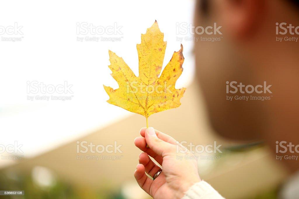 Que grande amarillo hoja - foto de stock