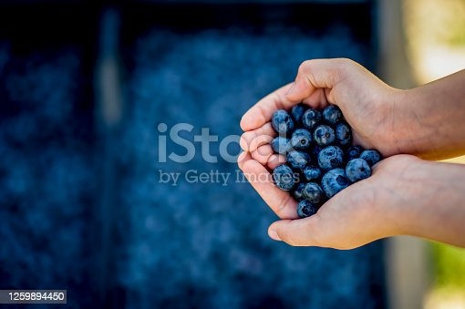 Image of unrecognizable person holding a  ripe blueberries in two hands over a fresh blueberry fruit background, healthy heart concept