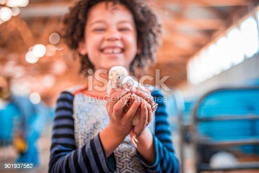 istock Holding chicken in her hands 901937582