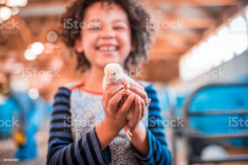 Huhn hält in ihren Händen – Foto