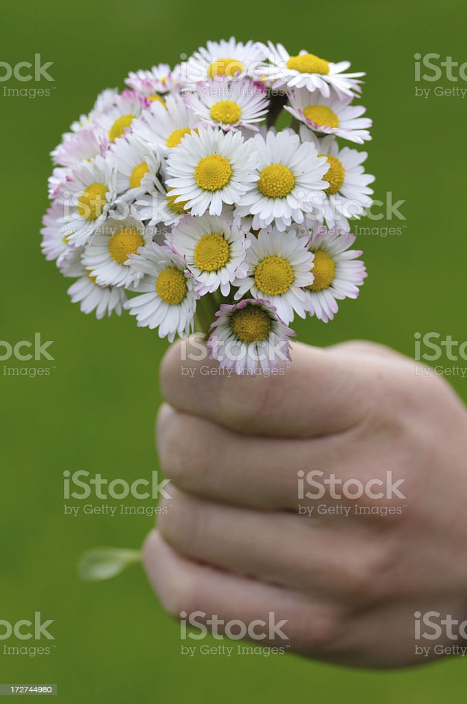 Holding Daisy Bouquet royalty-free stock photo