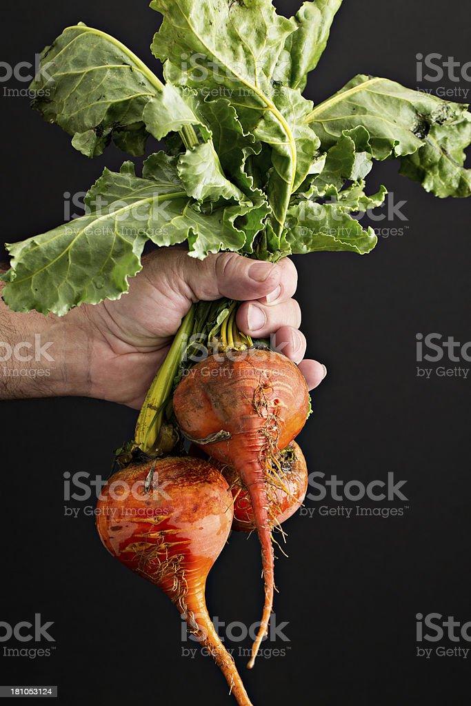 Holding Fresh Beets royalty-free stock photo