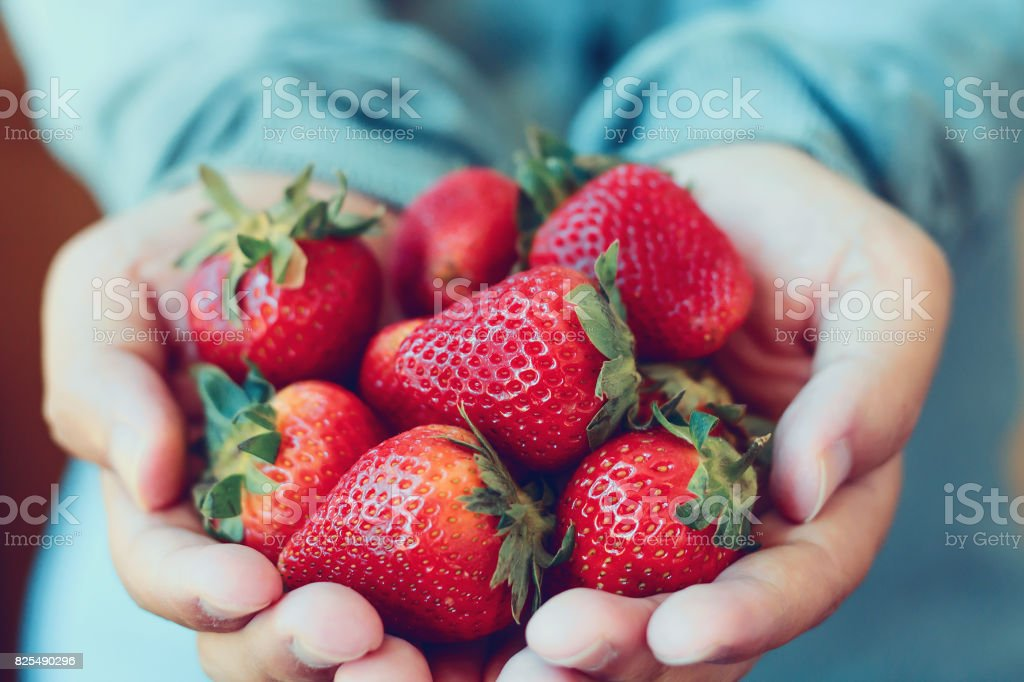 holding fresh strawberry stock photo
