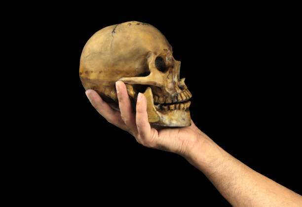 Holding human skull in hand. Conceptual image.( Shakespeare's Hamlet scene concept ) Holding human skull in hand. Conceptual image.( Shakespeare's Hamlet scene concept ) close up image human skull stock pictures, royalty-free photos & images