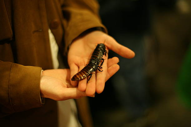 Holding Large Beetles stock photo