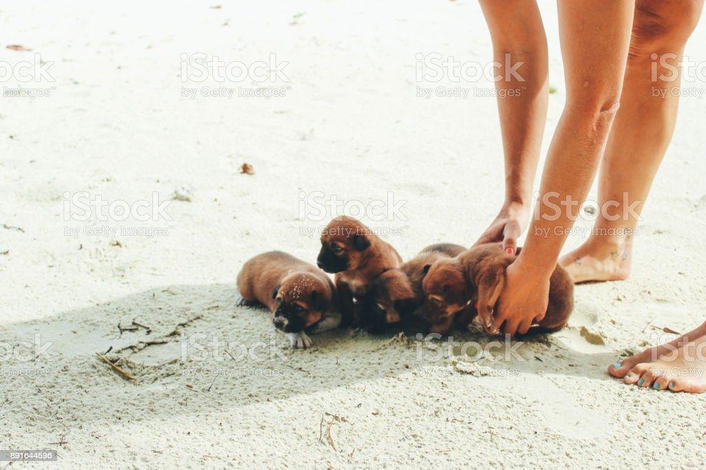 Holding little puppies on the sandy beach stock photo