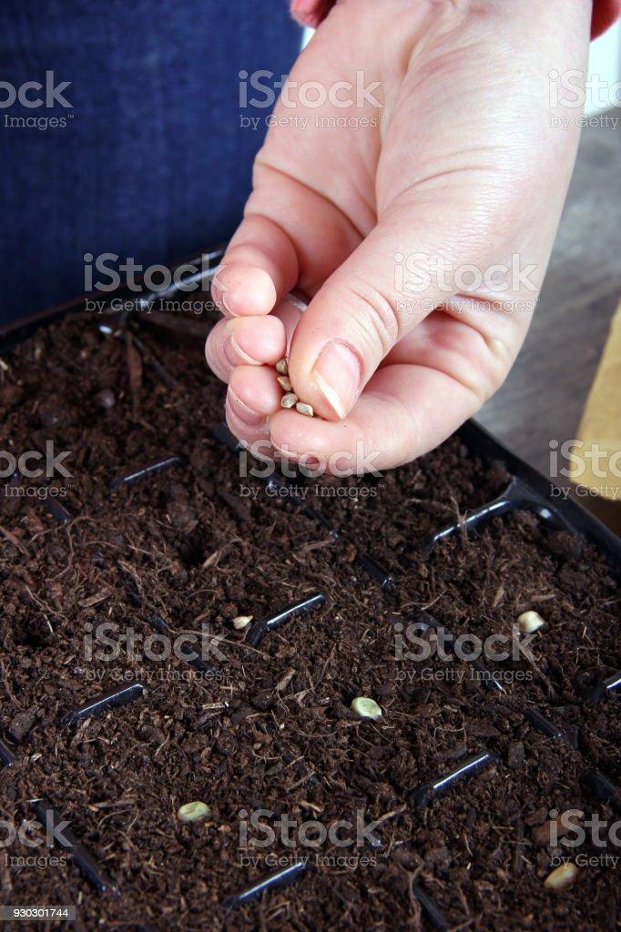 holding little seeds stock photo