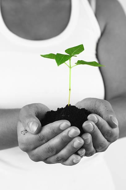 Holding neue green plant – Foto