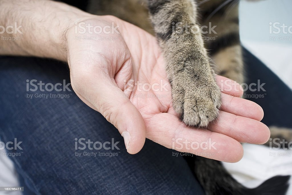 Holding Paws royalty-free stock photo