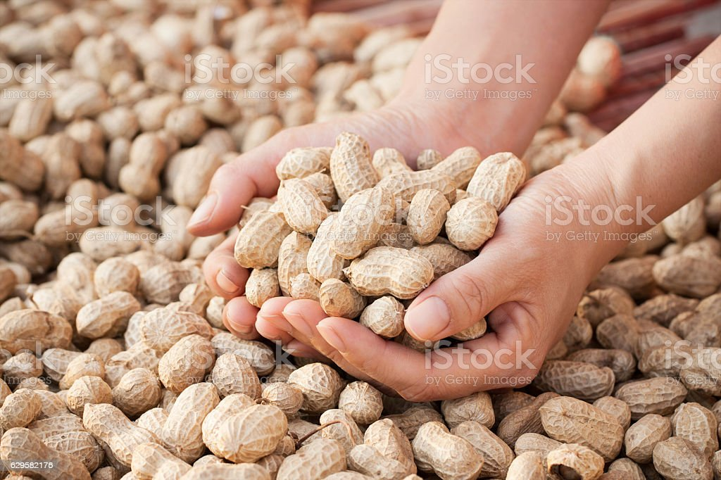 Holding  peanuts in autumn stock photo