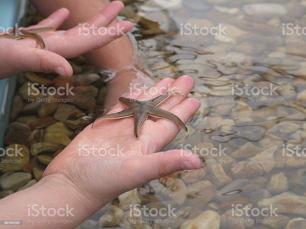 Holding Starfish stock photo