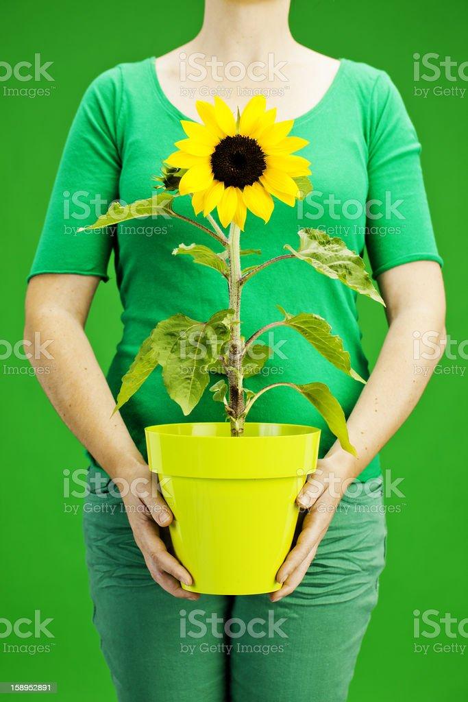 holding sunflower royalty-free stock photo