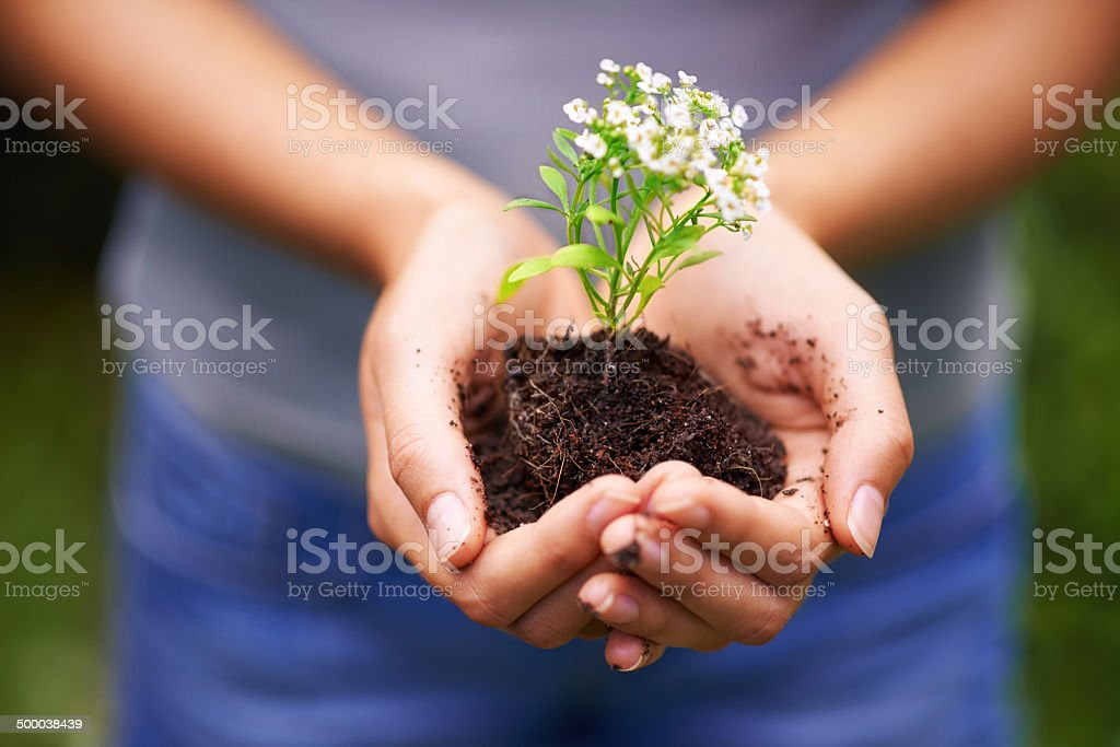 Holding the future in her hands stock photo