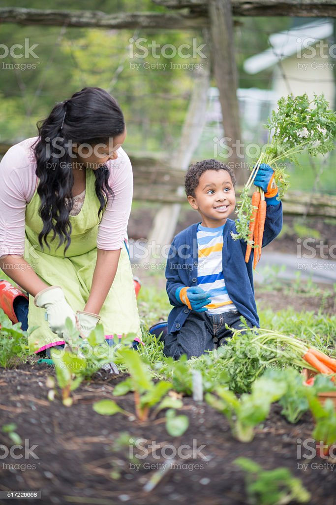 Holding up a Bunch of Carrots stock photo