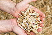 A man holding wood chips, prepared and ready for use as fuel for a biomass boiler.