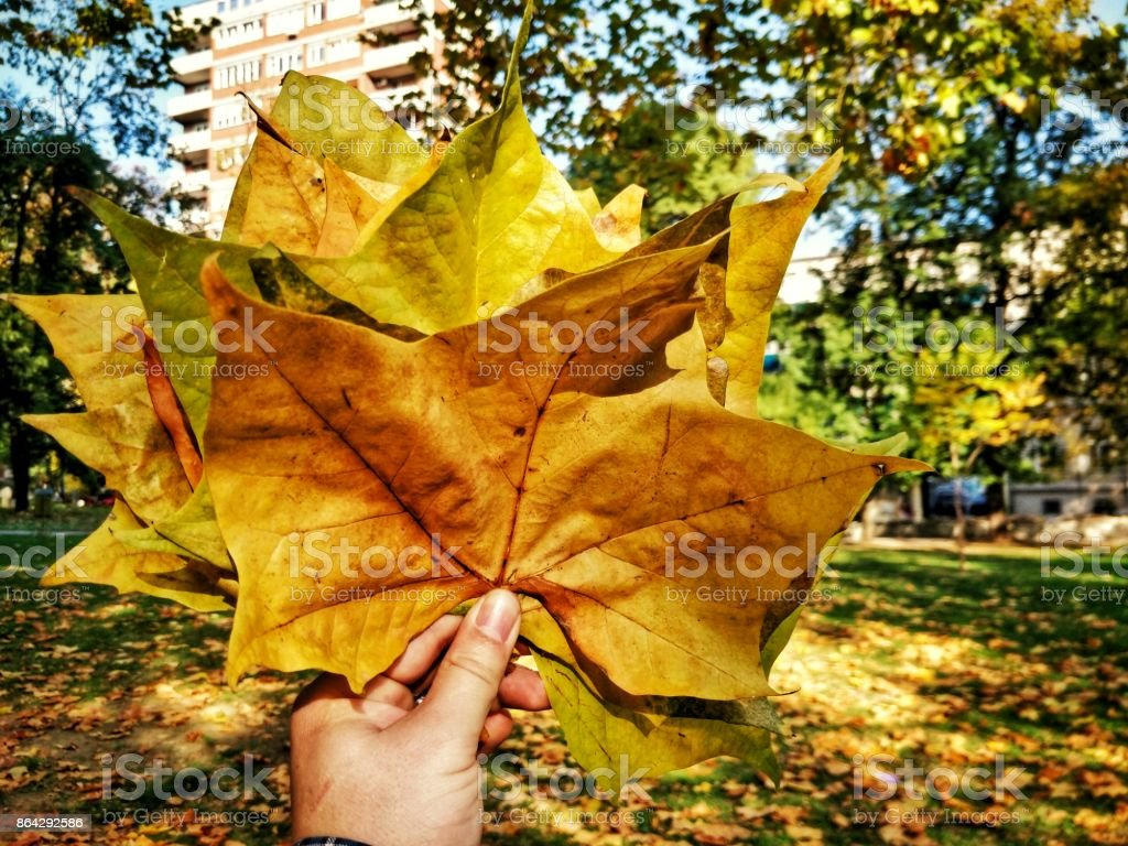 Holding Yellow and Green Leaves royalty-free stock photo