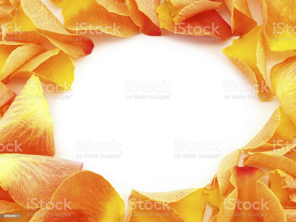 Hole in petal background royalty-free stock photo