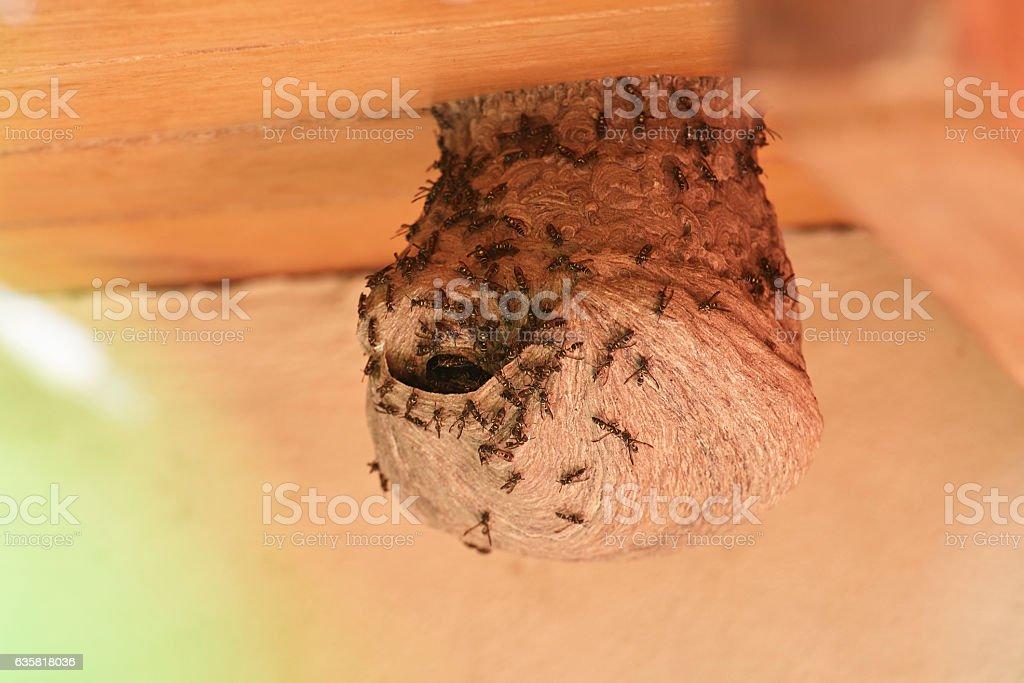 Hole in wap nest stock photo