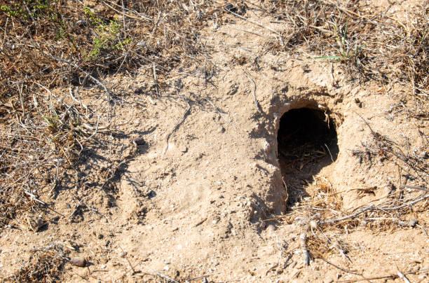 지상에 대초원에 알 수 없는 동물의 구멍 - 속이 빈 뉴스 사진 이미지