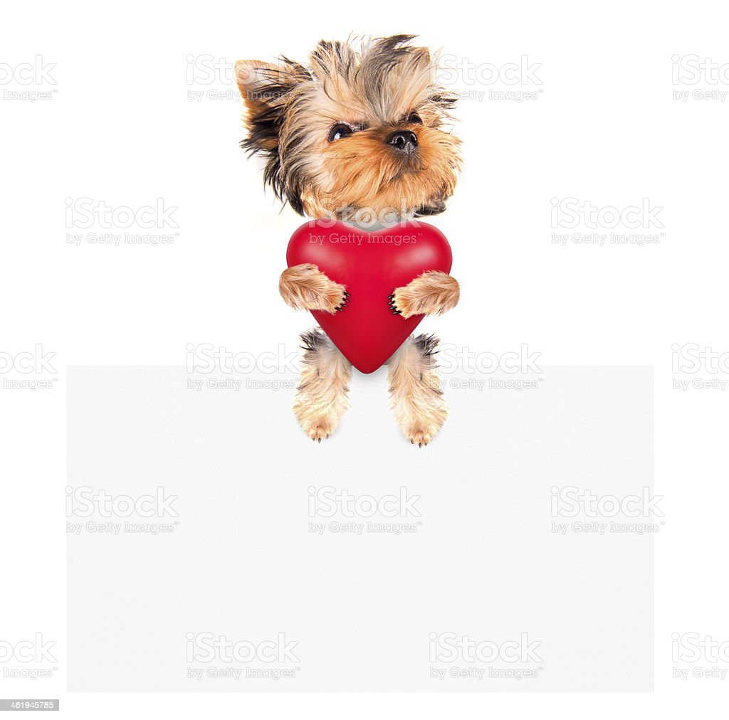 Holiday banner with dog holding heart royalty-free stock photo