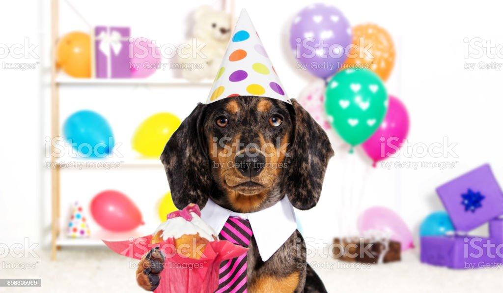 Urlaub Hund Geburtstag Stock Fotografie Und Mehr Bilder Von Cupcake