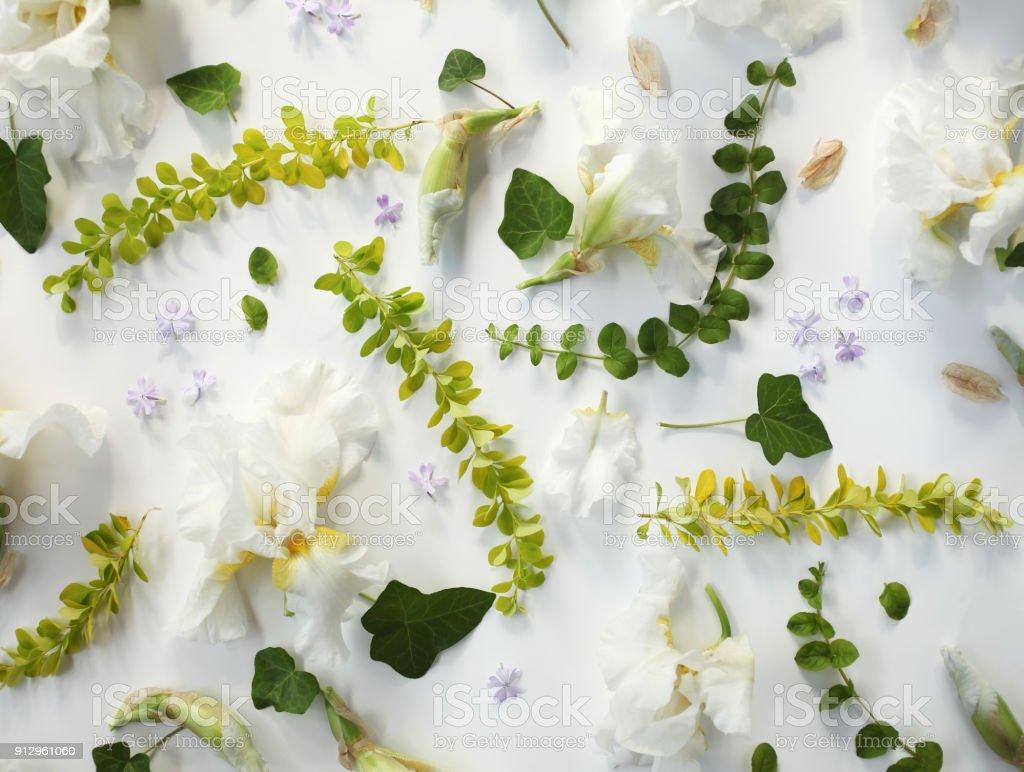 Fotografia De Patron Floral De Vacaciones Iris Blanco Brotes Flores