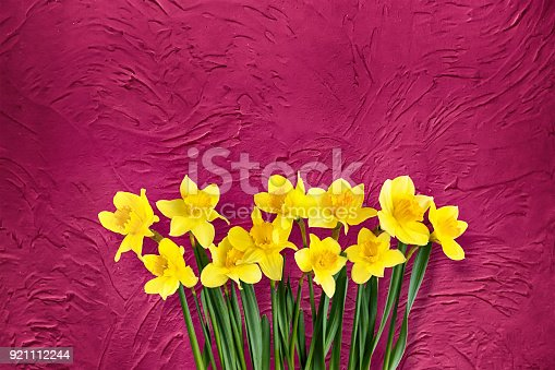 istock Holiday floral red background with daffodils flowers 921112244