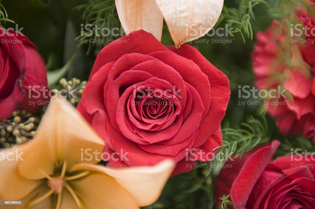 명절 꽃 royalty-free 스톡 사진