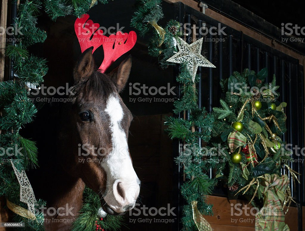 Holiday horse with red antlers stock photo