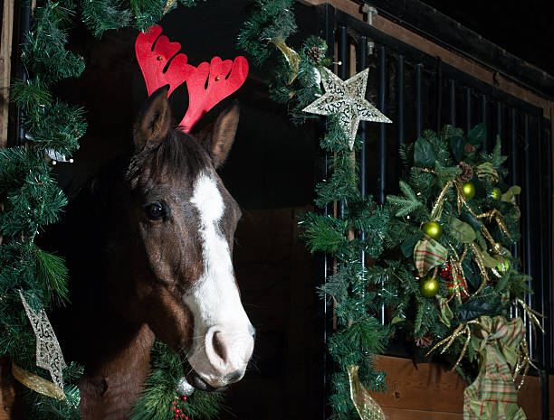 holiday horse with red antlers - kellyjhall stock pictures, royalty-free photos & images