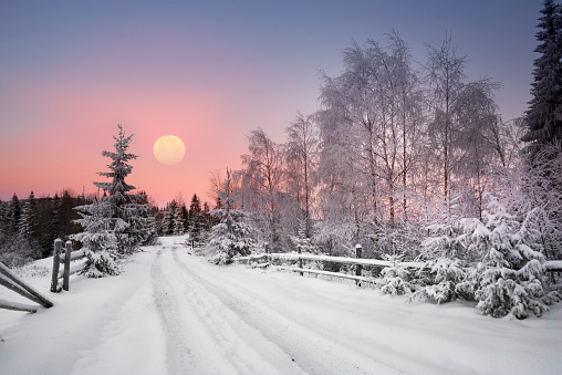 Severe frost in the mountains, frost and ice on the branches and beautiful art lighting creates a New Year's mood under the starry sky of the Galaxy on the Alpine fields in the Carpathians, Ukraine