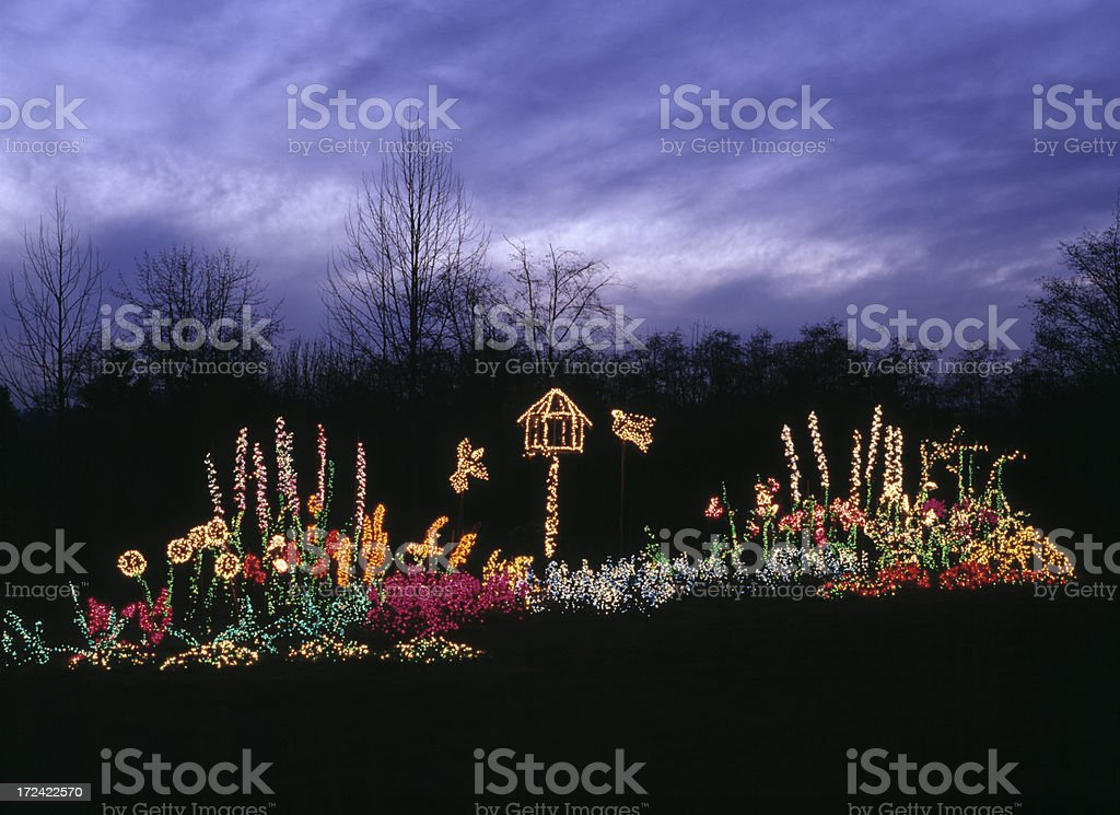 Holiday Lights in Garden, Christmas, Decoration, Dramatic Night Sky royalty-free stock photo