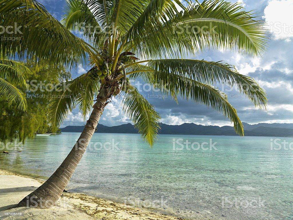 Holiday Paradise stock photo