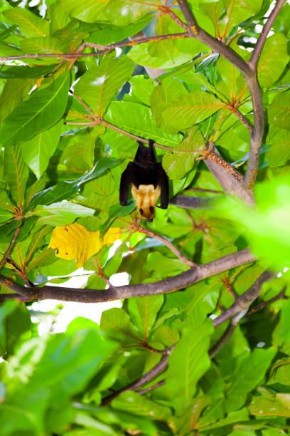 urlaub im paradies - wasserfledermaus stock-fotos und bilder