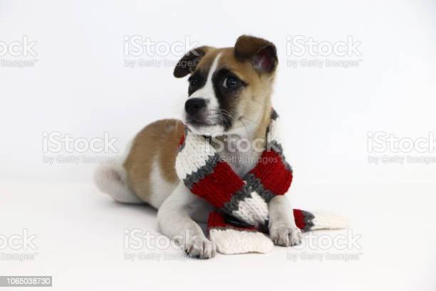 Holiday pets picture id1065038730?b=1&k=6&m=1065038730&s=612x612&h=kdaymcec3bgxtpdc3ojgbv22xsdpcuevrfthqo7kqns=